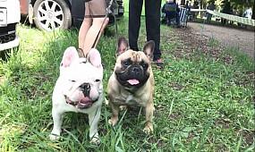Выставка собак Весна Кривбасса