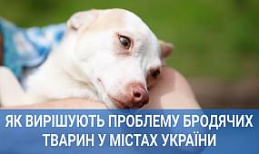 Як вирішують проблему великої кількості бродячих тварин у Кривому Розі, Львові та Харкові
