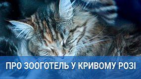 Де залишити кота на час відпустки: у Кривому Розі відкрили зооготель