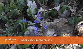 Флора весняного старту: більшість криворізьких первоцвітів - занесені до Червоної книги України