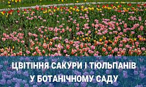 Сакури та тюльпани розцвіли у ботанічному саду Кривого Рогу | 1kr.ua